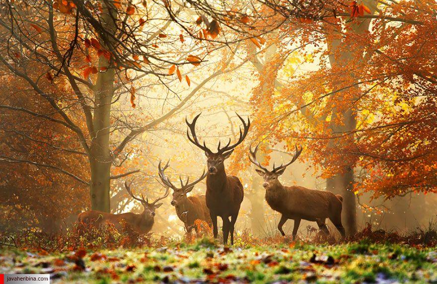لذت بردن حیوانات از جادوی پاییز